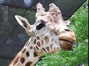 人気再燃で沸く福岡市動物園 100万人目指し、ユニーク企画で奮闘
