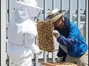 福岡三越、屋上で「都市養蜂」 開店20周年記念プロジェクトで